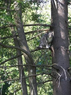 Basti im Baum 1