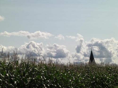 Maisfeld mit Kirchturm