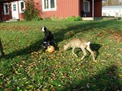 Bambi und Lisa 1