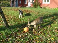 Bambi und Lisa 2