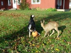 Bambi und Lisa 3