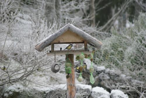 Vogelhaus 3