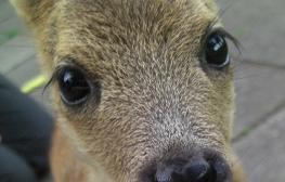 Bambis Augen