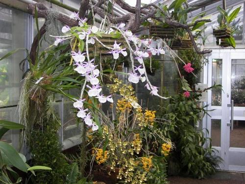 Botanischer Garten Göteborg 2