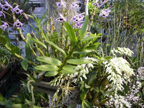 Botanischer Garten Göteborg 5