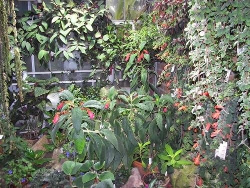 Botanischer Garten Göteborg 8
