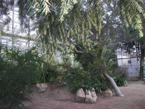 Botanischer Garten Göteborg 10