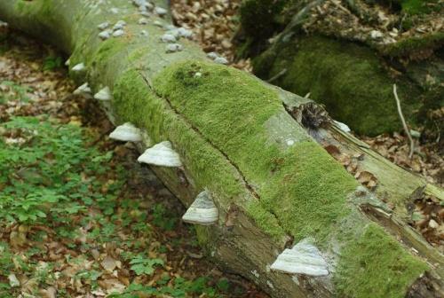 Baumpilze 2