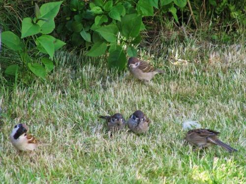 Vögelchen im Garten bei H & K