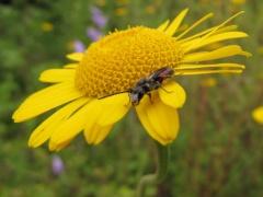 Insekten auf Gelb 1