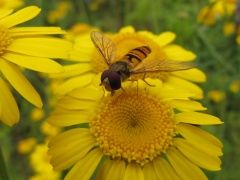 Insekten auf Gelb 2