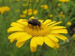 Insekten auf Gelb 3