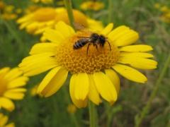 Insekten auf Gelb 4