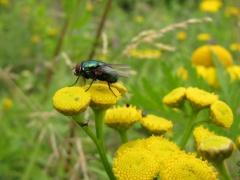 Insekten auf Gelb 5