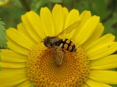 Insekten auf Gelb 6