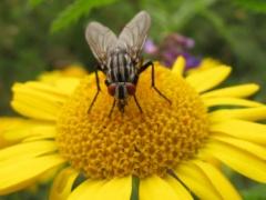 Insekten auf Gelb 7