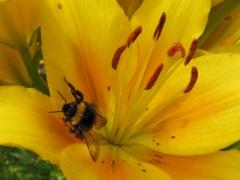 Insekten auf Gelb 8