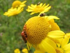 Insekten auf Gelb 10