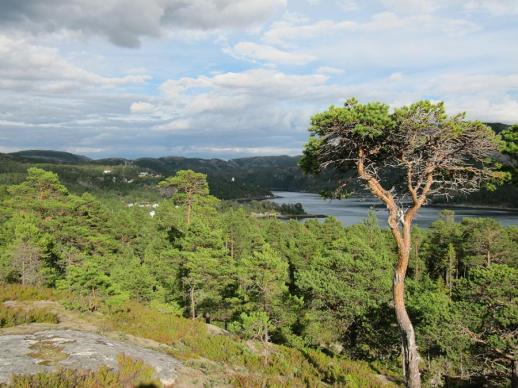 Blick vom Berg auf den Fjord