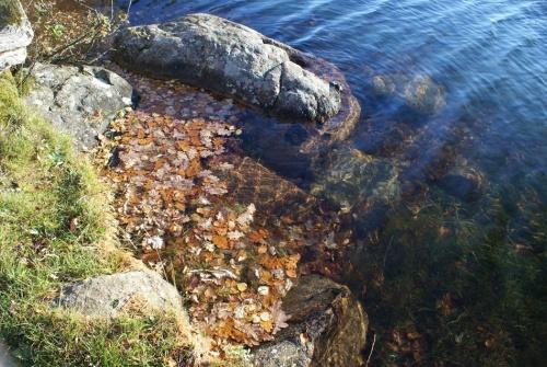 Herbstspaziergang am Navåsen03