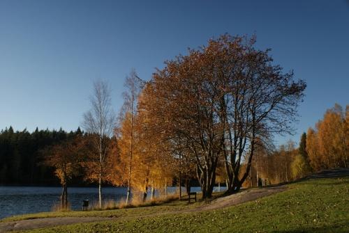 Herbstspaziergang am Navåsen06