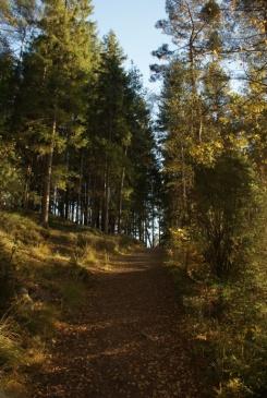 Herbstspaziergang am Navåsen09