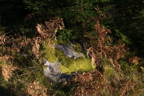 Herbstspaziergang am Navåsen11