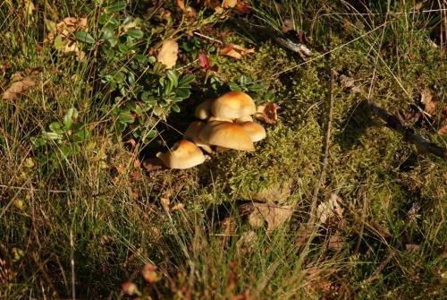 Herbstspaziergang am Navåsen12