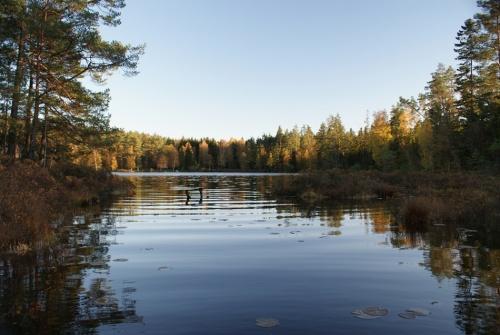 Herbstspaziergang am Navåsen19