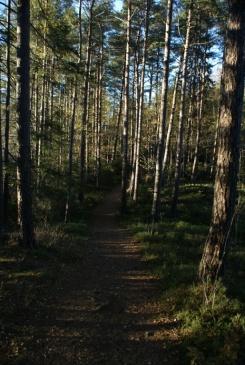 Herbstspaziergang am Navåsen20