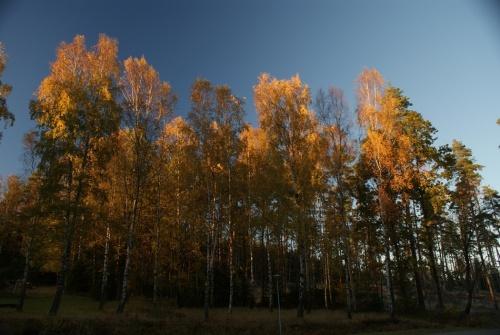 Herbstspaziergang am Navåsen22
