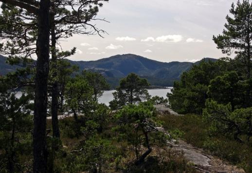 versteckter Blick auf den Fjord