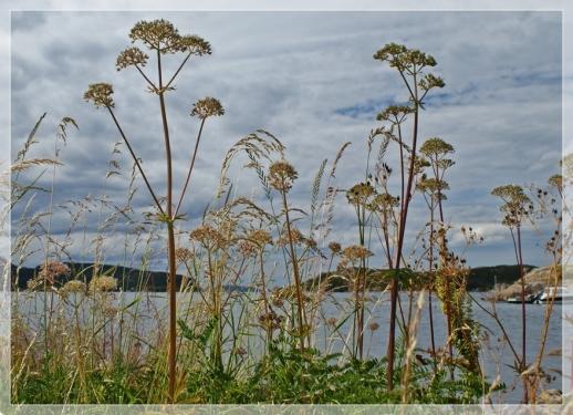 Gräser am Fjord