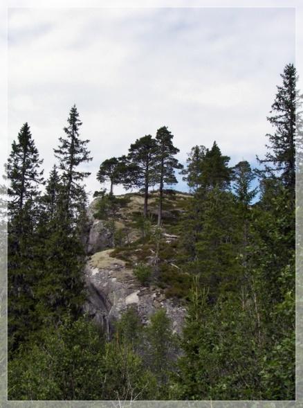 Bäume auf Fels
