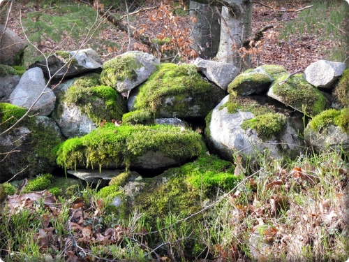 bemooste Steinmauer