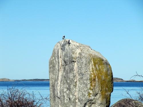 Vögel auf Felsen