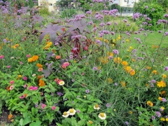 Botanischer Garten Uppsala 03