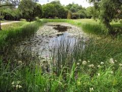 Botanischer Garten Uppsala 17