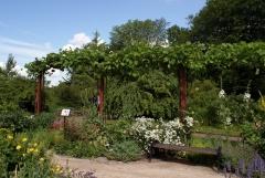 Botanischer Garten Göteborg 06