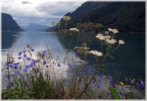 Blumen am Fjord