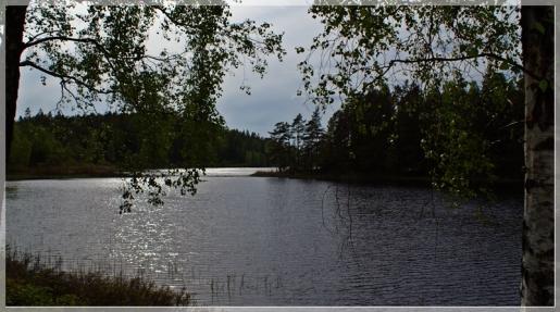 See und Birken