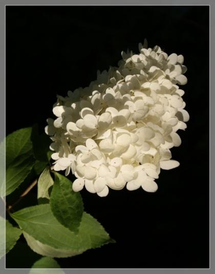 Blume für Tyler