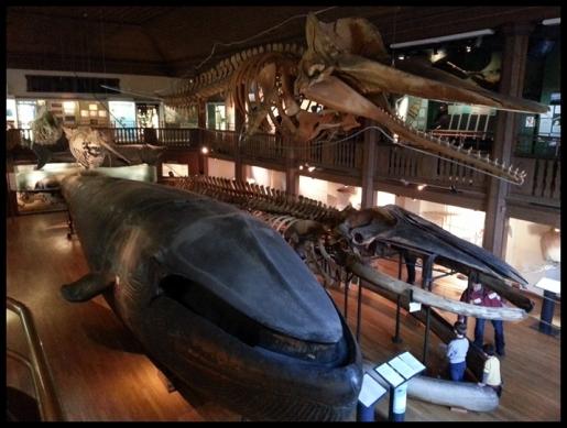 Museum 2