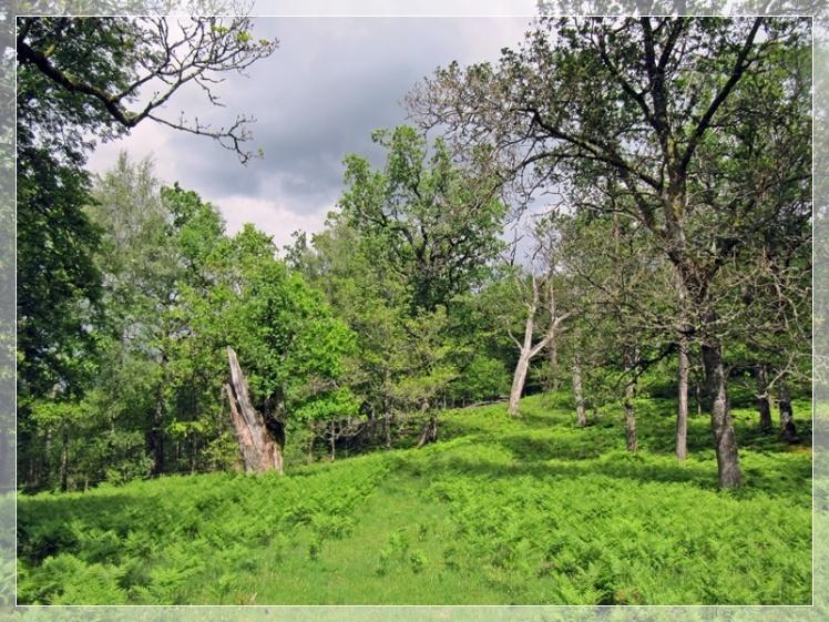 Naturreservat Backa