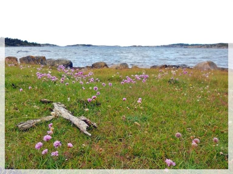 Svängehallar-Fjärehals 09