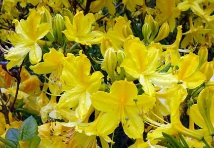 Blüten 05