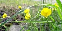Blüten 06