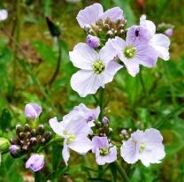 Blüten 09