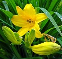 Blüten 14
