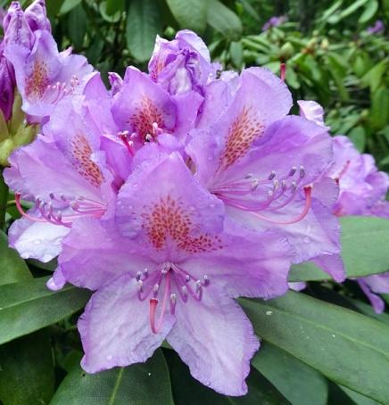 Blüten 15